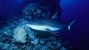 Jeden weekend, dwa ataki rekinów