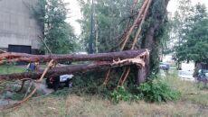 Zniszczenia po burzy w Olsztynie (Arkadiusz/Kontakt 24)
